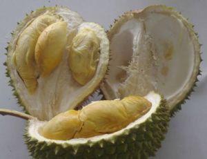 durian-breakaway