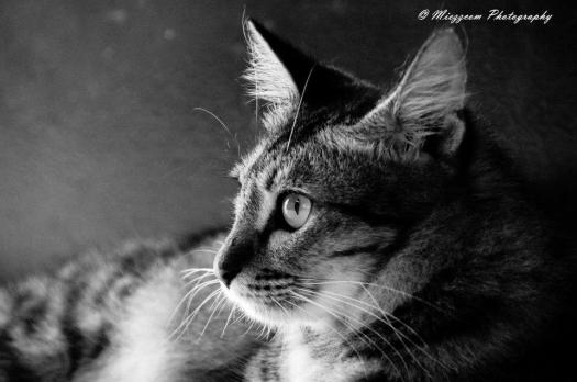 Guinevere bnw