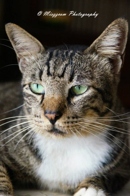 Kucing2