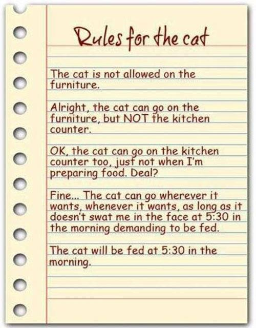 rules for cats