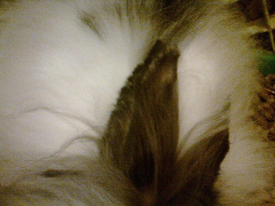 rabbit with mange